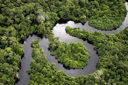 Puszcza Amazońska widziana z lotu ptaka