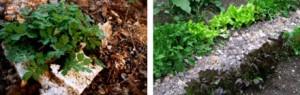 Opakowanie ekologiczne EcoCradle