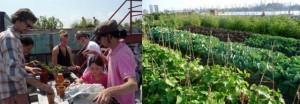 Ogród warzywny na dachu budynku