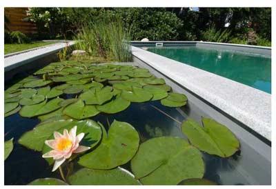 Staw kąpielowy w ogrodzie