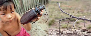 Olbrzymie owady