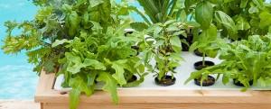 Mini ogród hydroponiczny
