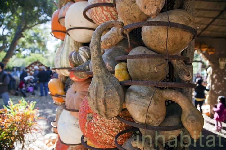 Dekoracje ściana z dyni
