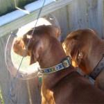 Psy wyglądające przez dziurę w płocie
