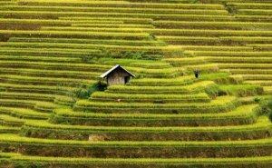 Dom, tarasy ryżowe