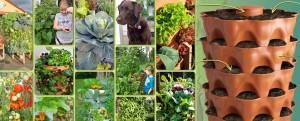 Uprawa roślin w domu