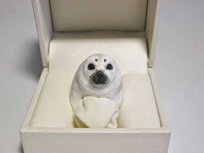 Pierścionek foka foczka
