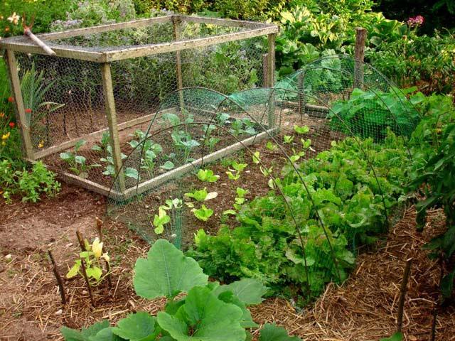 Ogr dek warzywny na 200 metrach kwadratowych dla 3 os b for Cendre de bois pour le jardin